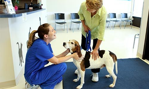 A pet and owner being welcomed by a Pets In Stitches staff member.