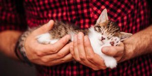 A man in a red and black flannel shirt holding a brown and white tabby cat asleep in his hands