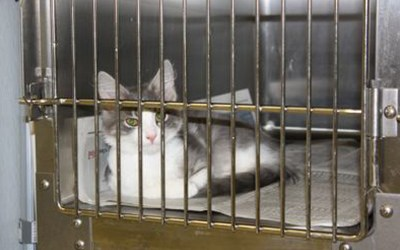 A cat in a clean and safe cage after surgery
