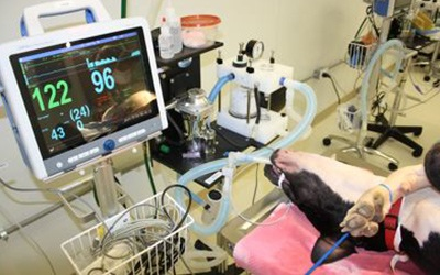 A dog that was sedated for surgery