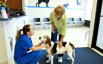 A pet owner and her dog meeting the staff of the pet clinic