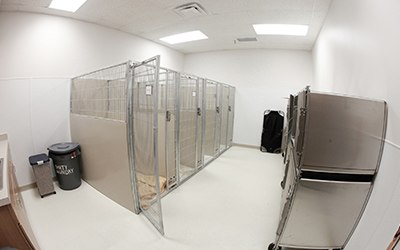 A special room that helps minimize dog bark echos