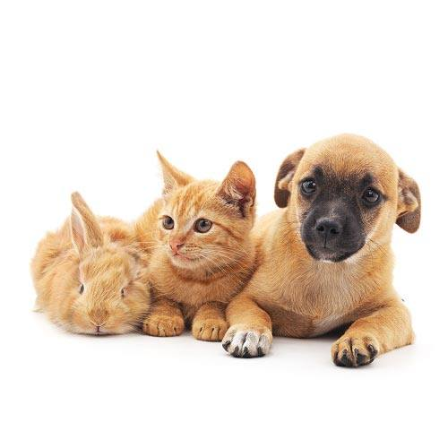 An orange tabby cat laying down with an orange bunny to the left and an orange dog to the right