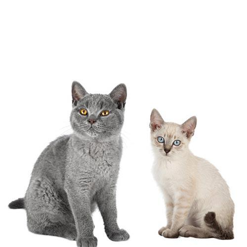 We Offer Vet Care For Stray Cats | Pets In Stitches