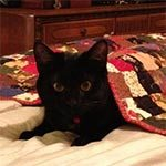 A black cat laying down under a red quilt