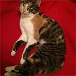 A tabby cat laying on it side in a red chair
