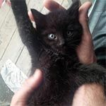 A small, black kitten laying on his back with one arm up in a man's hands