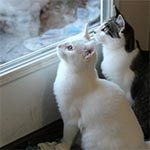 An all white cat sitting next to a brown and white cat in front of a window