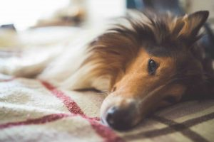 Quality post-surgical pet care is essential for recovery