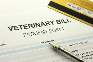 a veterinary bill