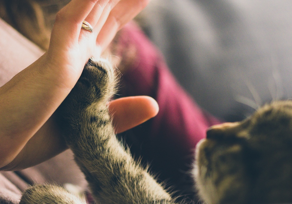 cat giving a person a high five