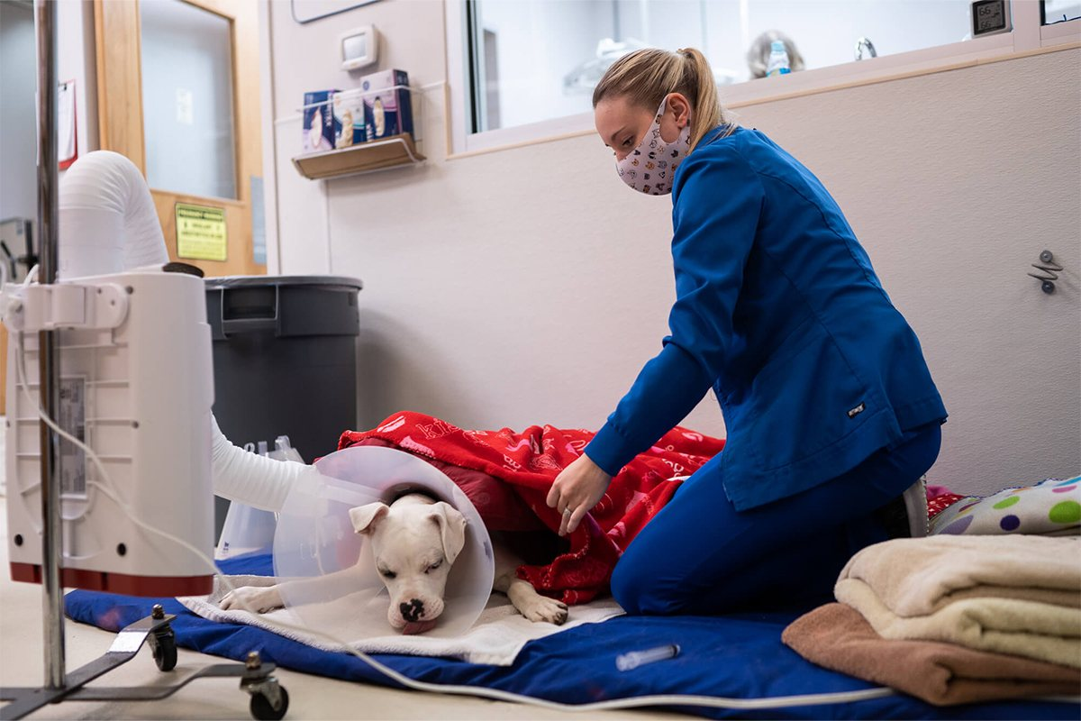 dog after surgery laying down next to vet